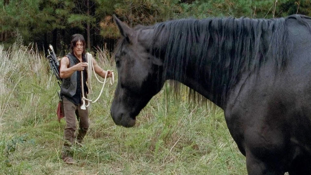 still of daryl dixon with a horse from the walking dead