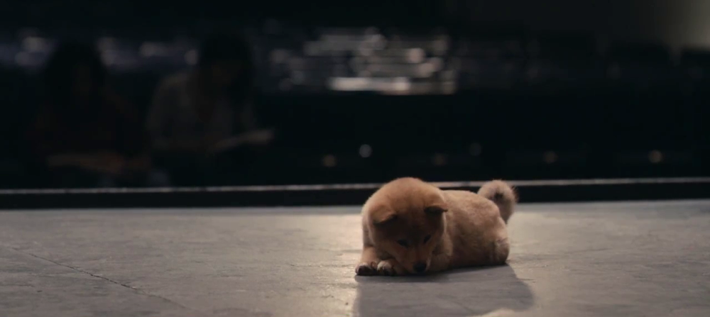 still of Hachi the puppy in Hachi: A Dog's Tale movie