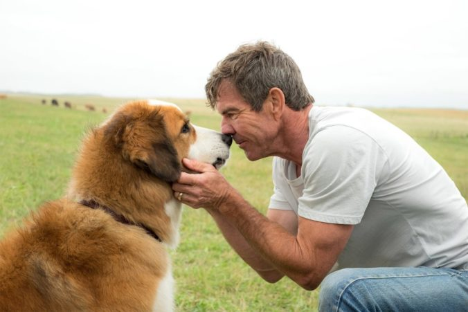 a dog's purpose movie wallpaper