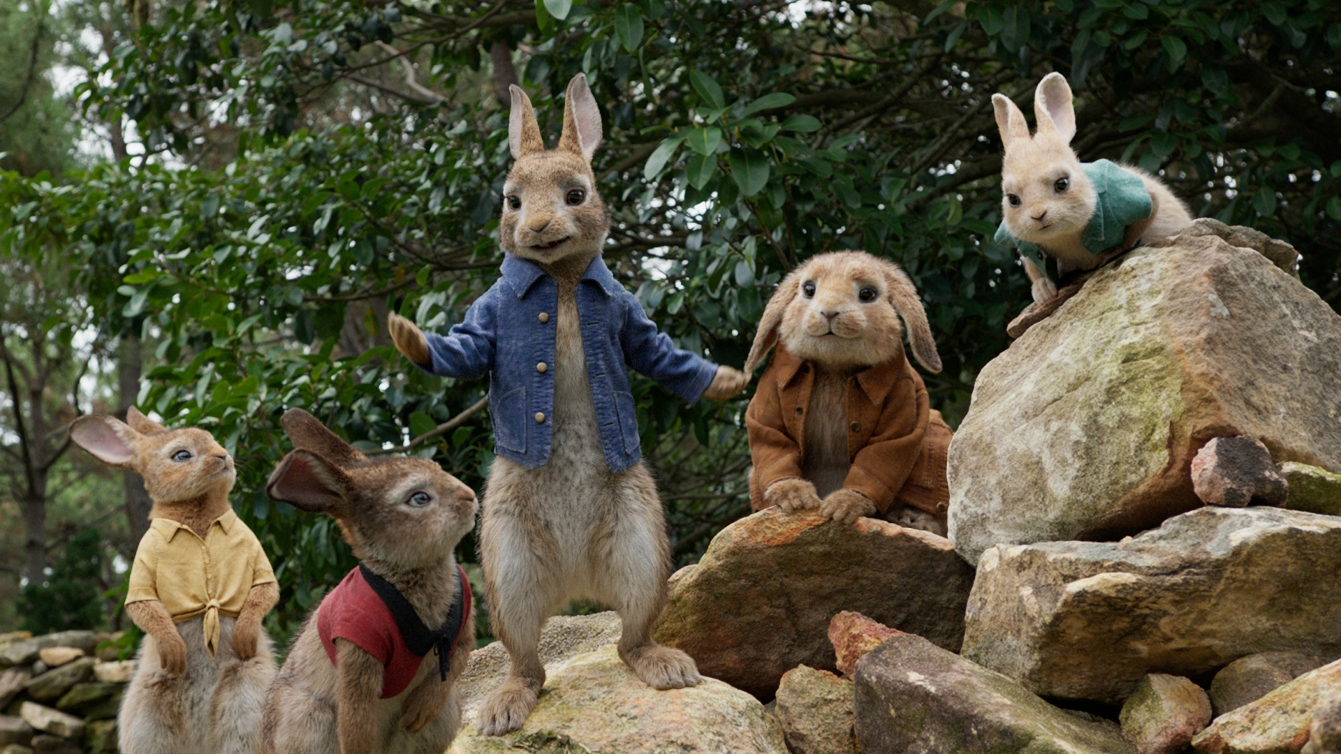 Peter Rabbit Movie the rabbit kin