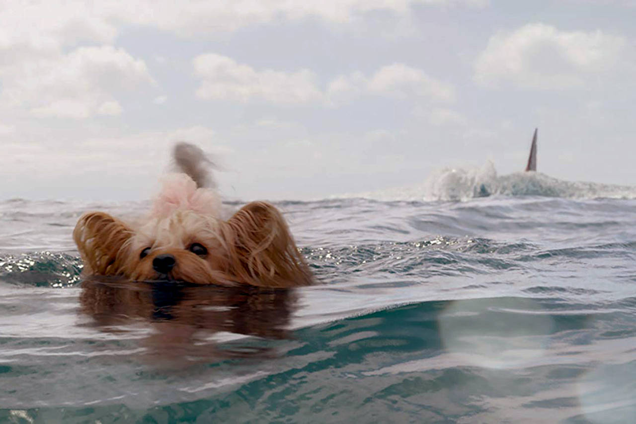 still of a small dog in the meg movie